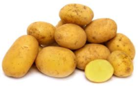 Potato_german_butterball